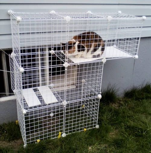 3f43674f05d7b4191a90b6075307f03b--outdoor-cat-run-diy-outdoor-cat-houses